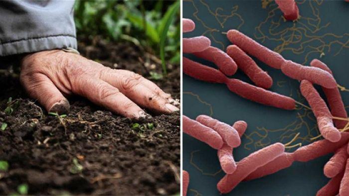 Phòng tránh bệnh Whitmore do vi khuẩn