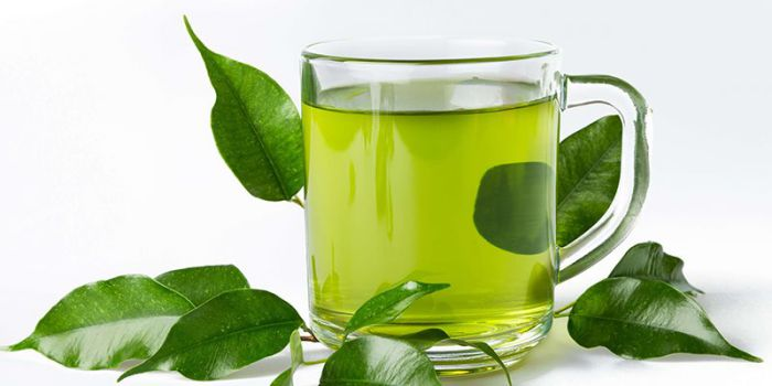 trà xanh tốt cho người đau nhức xương khớp